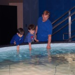 The Aquarium's ray touch pool is one of the most popular exhibits in the Bay & Ocean Pavilion.