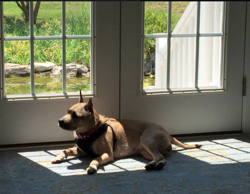 Quinn the dog in front of the French Door at Chrisopher Kait House