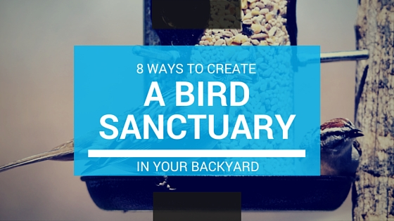 8 Ways bird sanctuary blog title