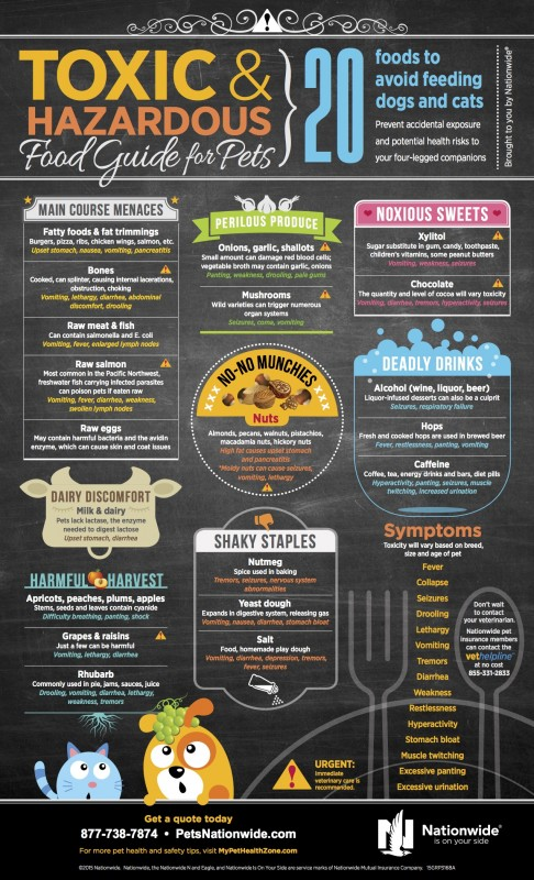Toxic Food Guide for Pets Infographic
