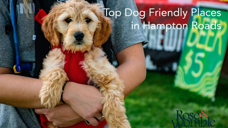 Dog Days of Summer: Top Dog Friendly Places in Hampton Roads