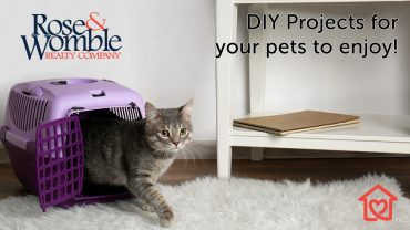 DIY Projects for your pets to enjoy!