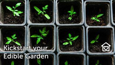 Kickstart your Edible Garden