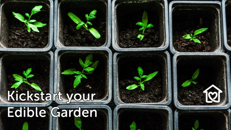Kickstart your Edible Garden